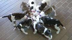 Полезная еда и лакомства для собак