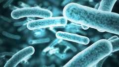Полезные и вредные бактерии. Какие бактерии самые опасные для человека