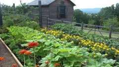 Полезные советы для дачи и огорода. Живая изгородь, формирование грядок и подкормка растений