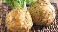 Полезный корень: сельдерей поможет очистить организм