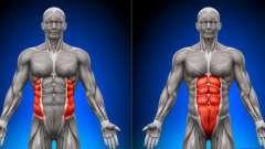 Поперечная мышца живота и другие мышцы брюшного пресса