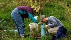 Посадка деревьев: этапы работы
