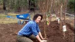 Посадка плодовых деревьев на дачном участке