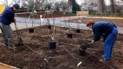 Посадка плодовых деревьев весной по лунному календарю