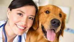 Поздравление с днем ветеринара: стихотворения, проза, подарки и музыкальные открытки