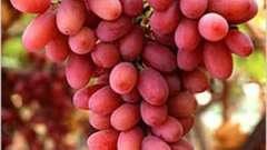 """""""Преображение"""" - виноград, который нужно обязательно попробовать!"""