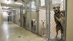 Приют для собак в нижнем новгороде: найдите себе друга!