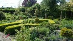 Пряные травы на даче - жизненная необходимость