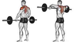 Протяжка со штангой стоя: какие мышцы работают?