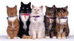Разновидности кошек: что нужно знать о домашних питомцах