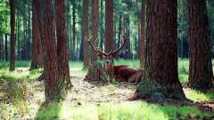 Республика беларусь: животные, природа, заповедники