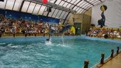 Ростовский дельфинарий ждет гостей!