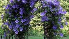 Садовая опора для клематиса: своими руками украшаем участок