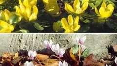 Садоводам на заметку: какие цветы можно посадить под зиму