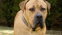 Самая злая порода собаки - какая она?
