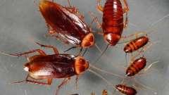 Самое эффективное средство от таракана, или война с насекомыми