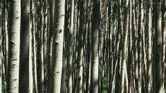 Самые древние растения на земле, дожившие до наших дней