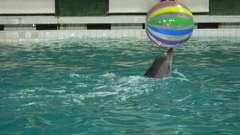 Санкт-петербург: дельфинарий и его описание