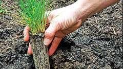 Сделаем сад красивым. Газонная трава: посадка и уход