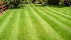 Сделаем садовый участок красивым - посадка газона