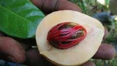 Секреты пряностей: применение мускатного ореха