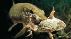Секреты рыбалки: ловля щуки на кружок
