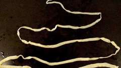 Широкий лентец - анаконда среди гельминтов