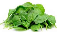 Шпинат: польза и вред зеленого продукта
