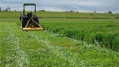 Сидераты. Что такое зеленые удобрения?