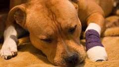Симптомы энтерита у собак и его лечение