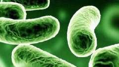 Симптомы туберкулеза на ранней стадии. Борьба с туберкулезом на ранней стадии
