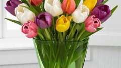 Сколько стоит тюльпан: интересные факты о цветке