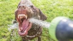 Собака пьет много воды: причина, норма