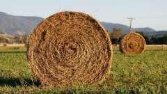 Сонник: к чему снится сено и солома?