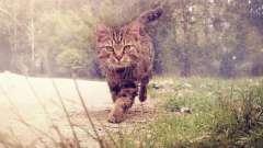 Сонник. Кошек увидеть во сне – к счастью или невзгодам?