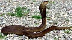 Сонник: приснилась змея. К чему сон?