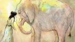 Сонник: слон - к чему снится?