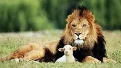 Совместимость львов и овнов. Характеристика союза