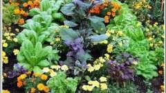 Совместимость овощей. Совместимость овощных культур на одной грядке