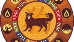 Совместимость змеи и собаки в китайском гороскопе