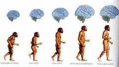 Современное место человека в системе органического мира