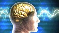 Средний мозг: функции и строение. Функции среднего мозга и мозжечка