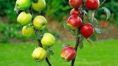 Сроки прививок плодовых деревьев. Виды прививок плодовых деревьев