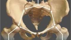 Строение крестца и копчика: анатомия и функциональное предназначение