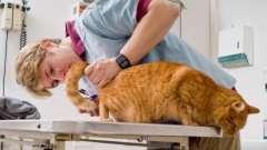 Таблетки «цестал» для кошек - отличное средство против глистов