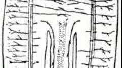 Тип плоские черви, особенности внешнего и внутреннего строения