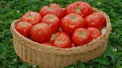 Удобрение для помидор: какие бывают и как проводят их подкормку