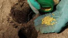 Удобрение осеннее поможет перезимовать вашим садовым «питомцам»