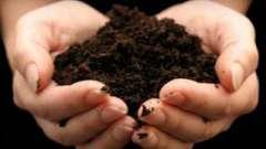 Удобрения для огорода: в пользу органического земледелия