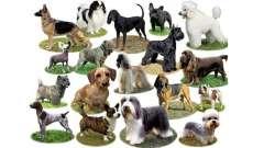 Узнаём интересное: какие бывают породы собак